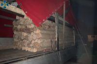 В Закарпатской области раскрыли схему нелегального вывоза древесины в ЕС