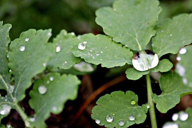 В Оренбуржье дождливая погода сохранится до конца недели.