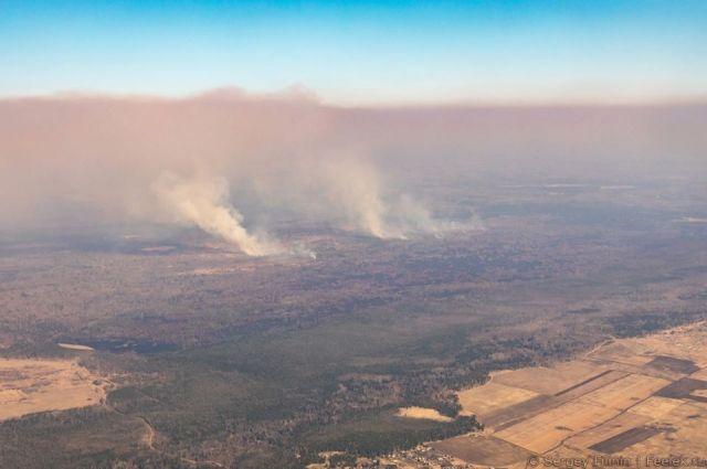 Весной леса горят в большинстве своём по вине человека.