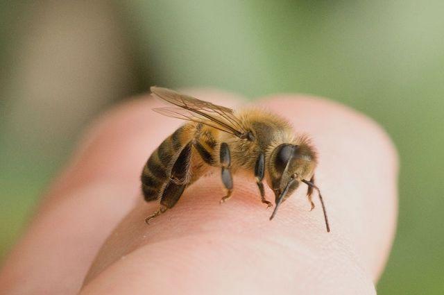 В Тернопольской области умер мужчина, которого покусал рой пчел