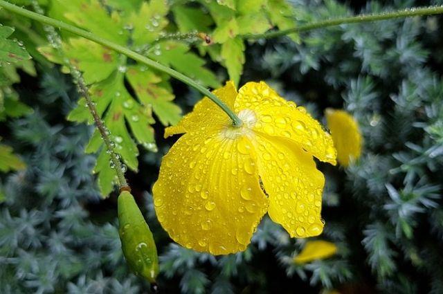 Прогноз погоды на 14 мая: дожди возвращаются