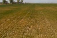 Засуха в Одесской области погубила урожай хлеба.