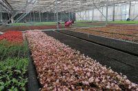 """В теплицах """"Управления зеленого строительства"""" почти 3 миллиона ростков рассады"""
