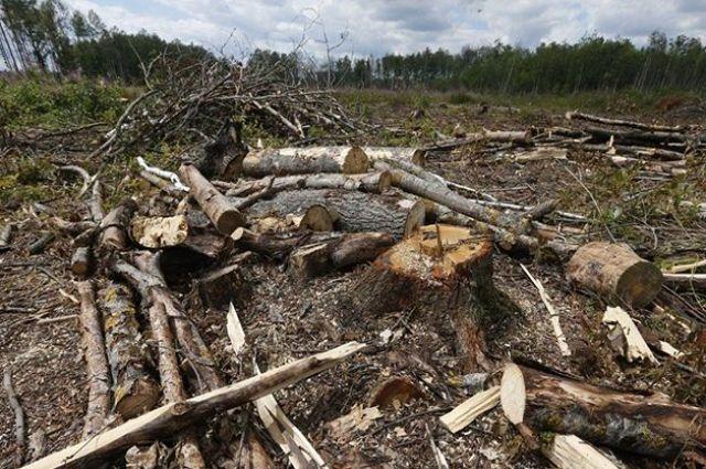 В Украине объемы незаконных вырубок лесов уменьшились на треть