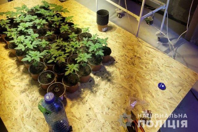 В Киевской области мужчина в подвале дома выращивал 643 куста конопли