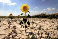 Кабмин выплатит украинским фермерам компенсацию за засуху: детали