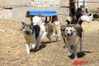 Оренбуржцы надеются, что новые правила регулирования численности бездомных животных на деле будут гуманными и эффективными.