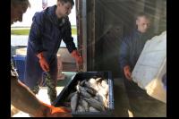 На Ямале летний промысел рыбы стартовал раньше обычного срока