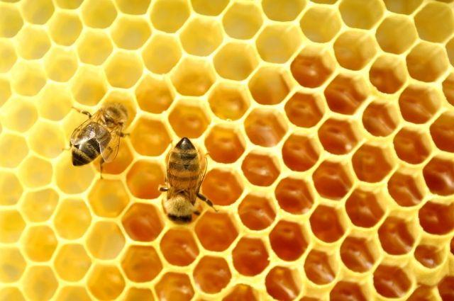 Несладкий мед. Почему на украинских пасеках – мор