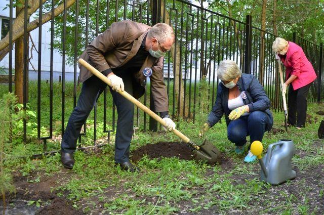 В Оренбурге «Аллея Победы» из сосен появилась на площадке детского сада.