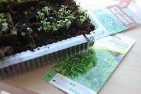 Чтобы выращивать зелень, не обязательно иметь полноценный огород, подойдёт и подоконник.