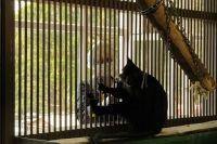 У приматов выше риск, чем у других животных, заразиться коронавирусом.