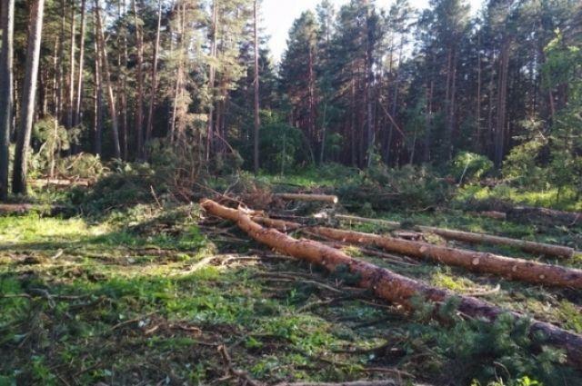 До 7 лет лишения свободы могут получить подозреваемые в незаконной вырубке леса.