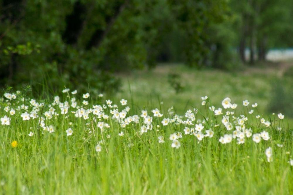 Вот такие сказочные поляны на о. Татышев.