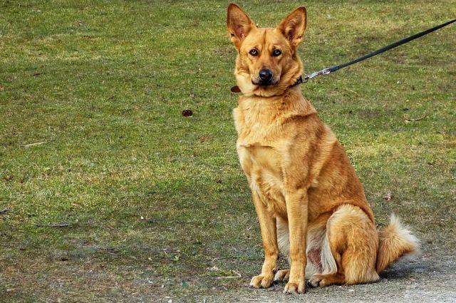 Выгуливать собак, где придётся – мера вынужденная.