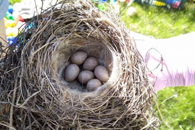 Голубили свили гнездо и ждут потомство.