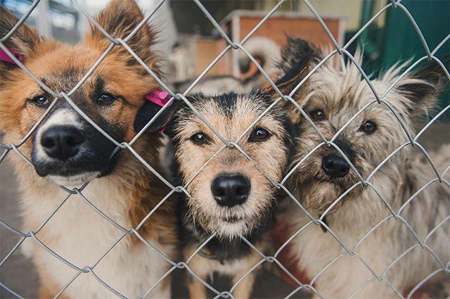 Бизнес на животных. Как не стать жертвой живодеров и черных передержек