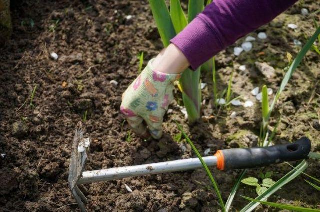 Урожай без химии: несколько секретов, которые пригодятся каждому огороднику