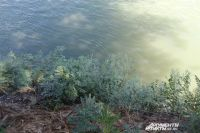 В Оренбуржье утром возобновлены поиски пропавшего 3-летнего ребенка.
