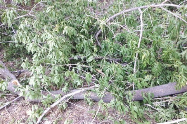 В Тюмени из-за грозы и сильного ветра повалило деревья
