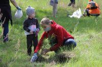 Больше трёх тысяч сосен высадили волонтёры на Синюшиной Горе.
