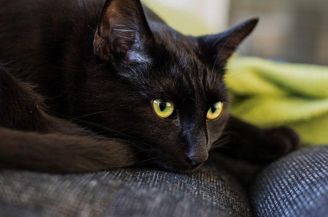В Тюмени оштрафовали ветеринарную клинику за фейк о кошачьем коронавирусе