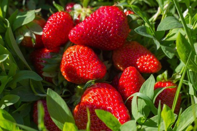 Знай меру. Сколько ягод нужно есть и кому они противопоказаны