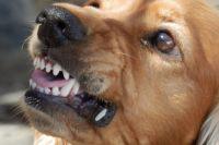 В Ямальском районе с хозяина собаки взыскали 30 тысяч рублей
