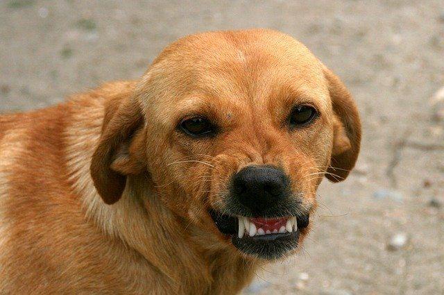 В Оренбуржье маленькую девочку покусала домашняя собака.