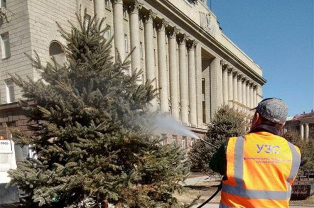 В начале апреля текущего года специалисты мыли деревья, подкармливая и очищая от пыли.