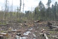 Вместо леса на болоте собирались возделывать поле...