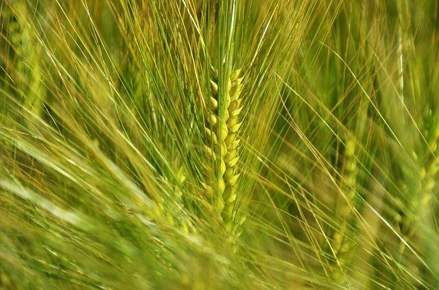 В Тюменской области развивается экспорт зерна