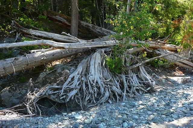 Тюменцам рассказали, что делать, если дерево повредило машину