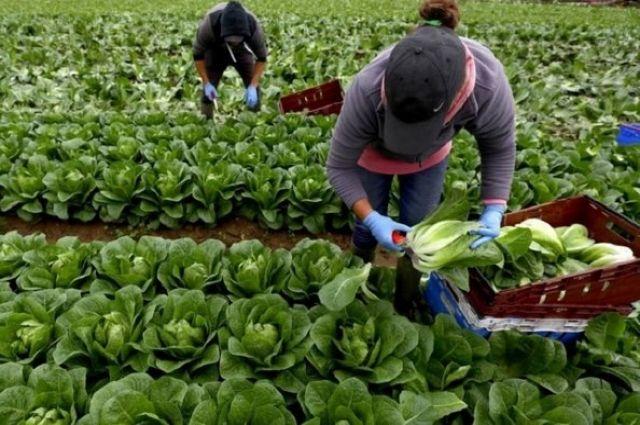 Украина и Польша могут заключить соглашение насчет сезонных работников