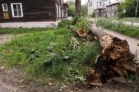 В халатности уличили чиновников из администрации Ленинского района Новосибирска.