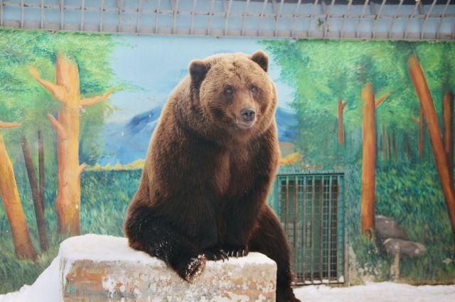 Медведей Тюменского зоопарка накормили мороженым местного производства