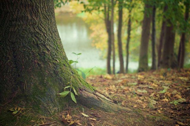Лес прочесали, но поиски пока результата не дали.
