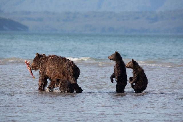 Медведей можно снимать по-разному.