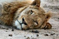 Привыкшие к людям животные очень скучают по общению.