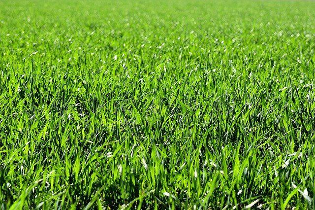 Тюменцам рассказали как вывести с одежды пятна от травы