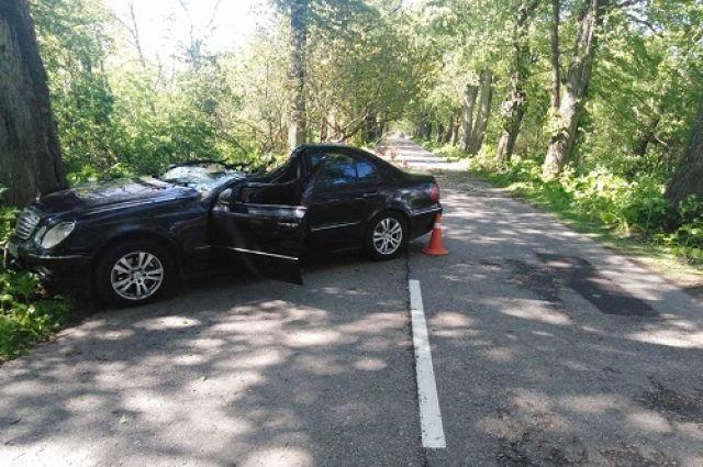 В Зеленоградском районе дерево упало на дорогу, пострадали два человека