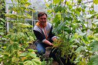 Олег Курдыбаха на собственном примере доказал, что виноград может расти в Сибири не хуже, чем на юге, и, возможно, даже лучше.