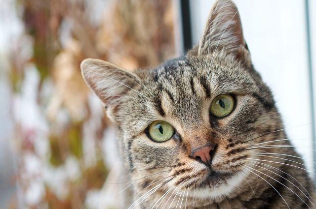 Спасатель спустился к окну на тросах и освободил кота, а потом запустил обратно в квартиру.
