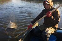 Младший специалист Артем Кореев ведет учет личинки омуля на реке Кичера.