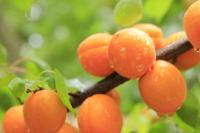 Под угрозой: на урожай каких фруктов и овощей негативно повлияла погода
