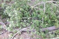 В Тюмени приостановлены работы по сносу деревьев на улице Мельничной