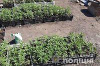В Запорожской области у мужчины изъяли оружие и более 500 кустов конопли