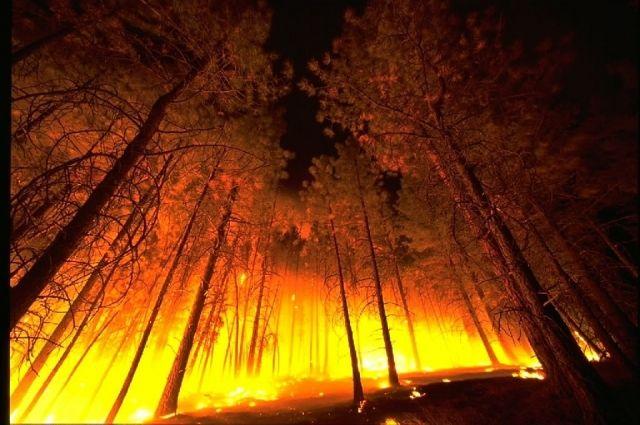 В Надымском районе зафиксировали возгорание леса