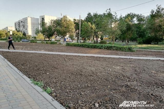 В Оренбурге исчезли высаженные несколько лет назад голубые ели.