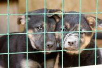 Жители Гая жалуются на выброшенных щенков.